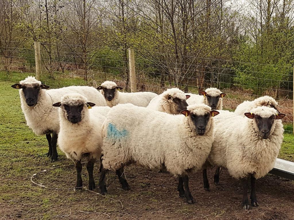Start Your Own Flock